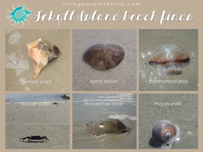 jekyll island beach finds